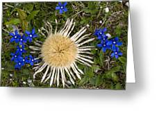 Carlina Acaulis And Gentiana Verna Greeting Card