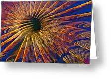 Carnival Abstract Lights Greeting Card