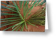 Carpet Beetle Larval Hairs, Sem Greeting Card