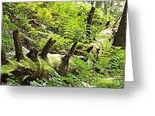 Carpet Of Ferns Greeting Card