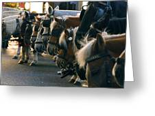 Carriage Horses Greeting Card