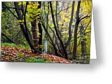 Cartoon Forest Greeting Card