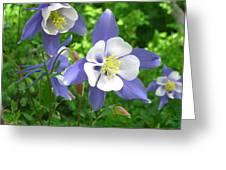 Cascade Columbine  Greeting Card