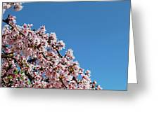 Cascade In Pink Greeting Card