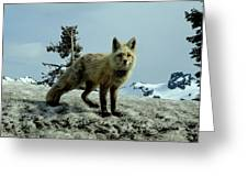 Cascade Red Fox 2 Greeting Card