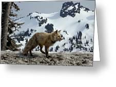 Cascade Red Fox 3 Greeting Card