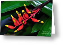 Cascading Color Greeting Card