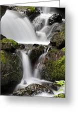 Cascading Creek In Temperate Rainforest Greeting Card