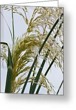 Cascading Pampas Greeting Card