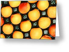 Castlebrite Apricot Greeting Card by Photo Researchers