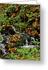 Casual Creek Greeting Card