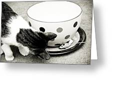 Cat And Mouse Coffee Greeting Card