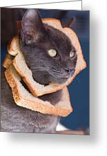Cat Breading Sandwich  Greeting Card