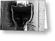 Cat Coming In Greeting Card