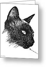 Cat Drawings 5 Greeting Card