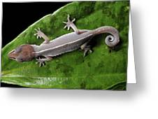 Cat Gecko Greeting Card