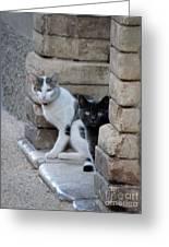 Cat Guardians Greeting Card