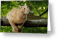 Cat Hanging On A Limb Greeting Card