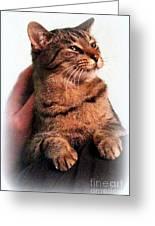 Cat Heaven Greeting Card