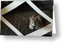 Cat In A Frame Greeting Card