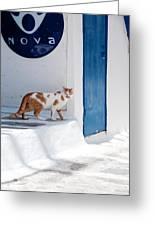 Cat In Mykonos Greeting Card