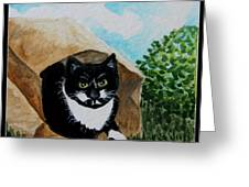 Cat In The Bag Greeting Card