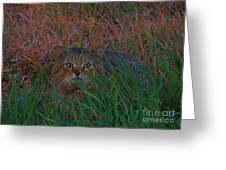 Cat In The Grasses Greeting Card