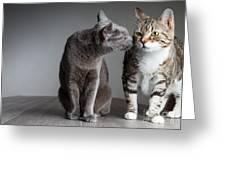 Cat Kiss Greeting Card
