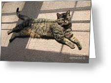 Cat Life Greeting Card