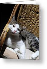 Cat Lying On Wooden Children Chair Greeting Card by Sami Sarkis
