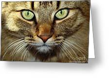 Cat Named Hooch Greeting Card