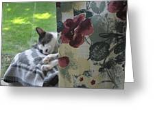 Cat Nap Curtain Greeting Card