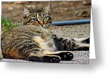 Cat Nap Interuption Greeting Card