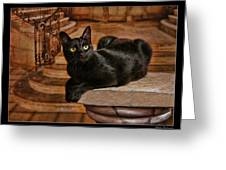 Cat On Pillar Greeting Card