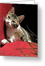 Cat On Red Greeting Card