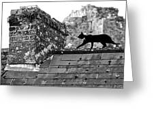 Cat On Slate Roof Greeting Card