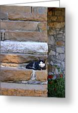 Cat On Stairs Greeting Card