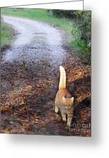 Cat On The Road Again Greeting Card