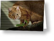 Cat Out On A Limb Greeting Card