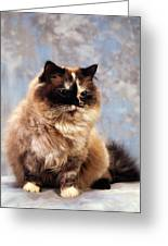Cat Portrait Of A Cat Greeting Card