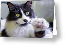 Cat Reaches For Camera Greeting Card