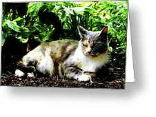 Cat Relaxing In Garden Greeting Card