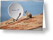 Cat Sat Greeting Card
