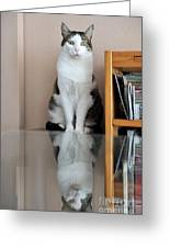 Cat Standing On Chair Greeting Card