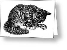 Cat-tabby-posters-1 Greeting Card