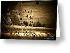 Cat Tails And Hay Rolls Greeting Card