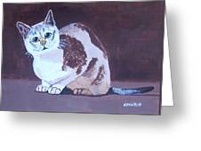 Cat With Brown Background Greeting Card