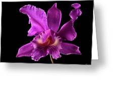 Catalea Orchid Greeting Card