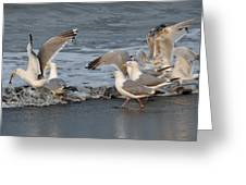Catch Me If You Can  Greeting Card by Debra  Miller