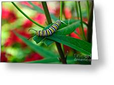 Caterpillar Before The Butterfly 1 Greeting Card